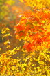 bright autumn leaves in the natural environment