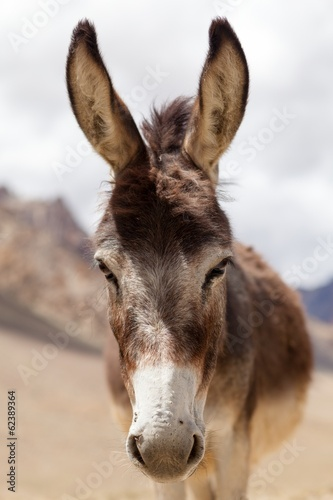 Deurstickers Ezel Portrait of Donkey