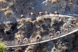 A Mule Caravan on Bridge