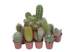 Many specimen of cactus,