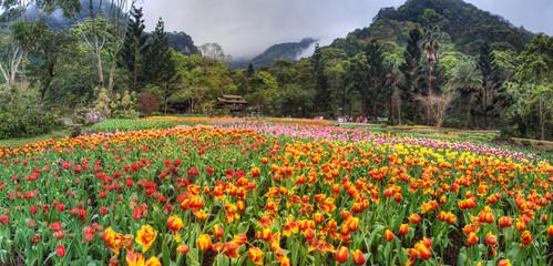 Beautiful tulip place