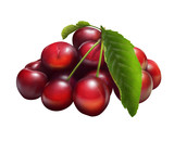 Illustration of fresh cherries isolated on white