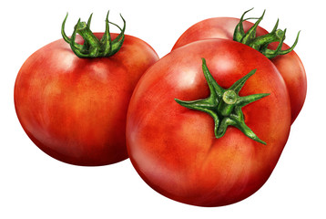 Illustration of red tomatoes isolated on white background