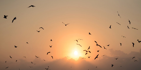 Seagulls with beautiful sunset