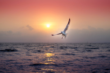 Seagull with beautiful sunset in the background