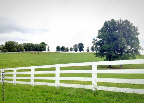 Horse farm, country summer landscape