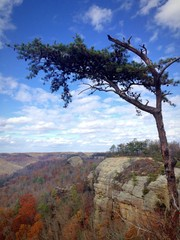 Pine tree on the cliff of countains