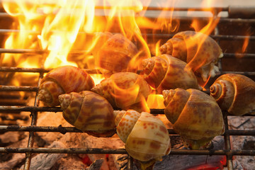 Grilled spotted babylon shell  on flaming in seafood restaurant