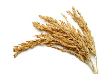 Rice stalks