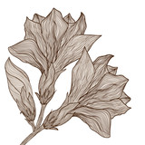Vector hand drawn elegant flower in vintage style