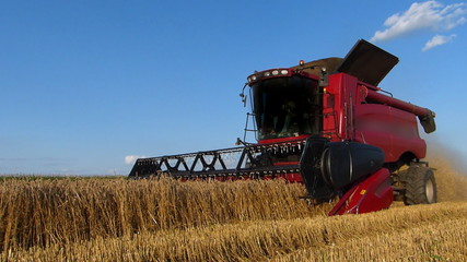 Harvester working on a wheat field