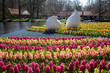 Lisse, Netherlands - April 20, 2013: Flowers in Keukenhof park,