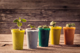 Young plants in pots on wooden background