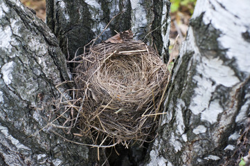 Empty bird's nest closeup