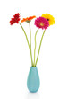 Four Gerber flowers in colorful vase