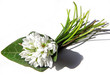Snowdrop bouquet