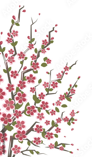 Sakura branch. Eps8 vector illustration. Isolated on white