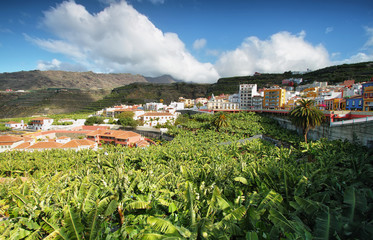 Banana plantation at Tazacorte, La Palma, Canary Islands