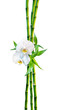 couple concept - two orchid flowers and shoots bamboo