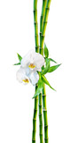 Fototapety couple concept - two orchid flowers and shoots bamboo