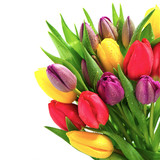 Fototapety fresh spring tulip flowers with water drops