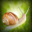Natural background with Edible snail (Helix pomatia).