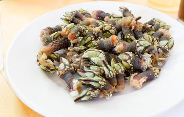 Goose barnacle