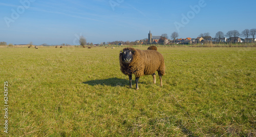 Sheep before the skyline of an ancient village