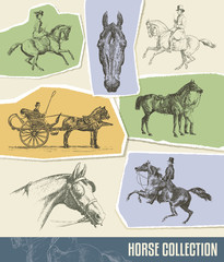 Vintage Horse Vector Set