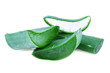 Aloe Vera Leaf isolated on white