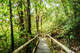 path in woods, doi inthanon national park, chiangmai Thailand