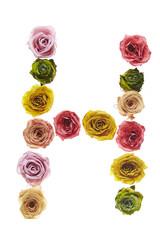 Rose font H