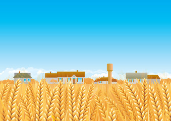 Countryside. Landscape of Grain fields and Farmhouses