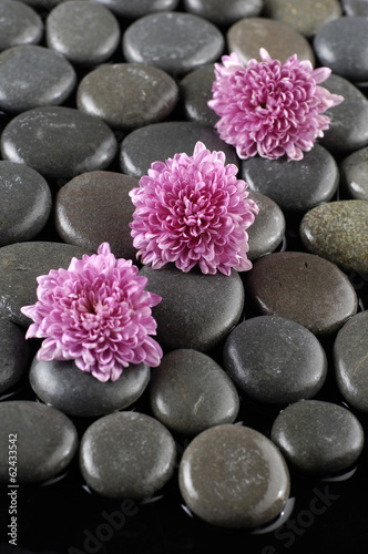 Foto op Canvas Madeliefjes Three pink gerbera daisy on pebble