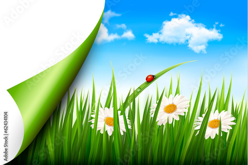 Spring background with flowers, grass and a butterfly. Vector.