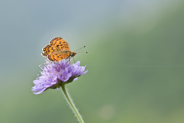 Spring butterfly with purple wild flowers