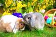 Hasen mit Osterkorb im Garten