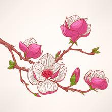 magnolia en fleurs rose