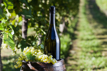 Bottle of Champagne with grapes and old barrel in a vineyard