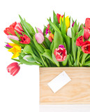Tulips in the box isolated on white background