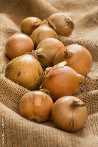 Onion on blanket