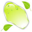 Green leaf with space for text. Vector. EPS10
