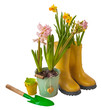 Yellow daffodils and yellow rubber boots