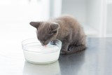 Kitten drinking milk from bowl