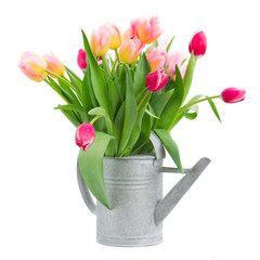 pink and red tulips bouquet in watercan