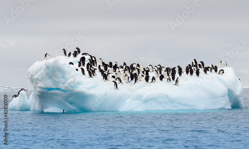 Deurstickers Pinguin Adult adele penguins grouped on iceberg