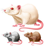 illustration of lab rat on white background