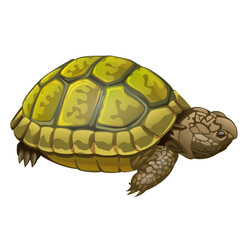illustration of little turtle