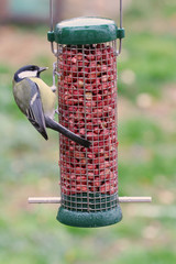 Great tit perched on a bird feeder