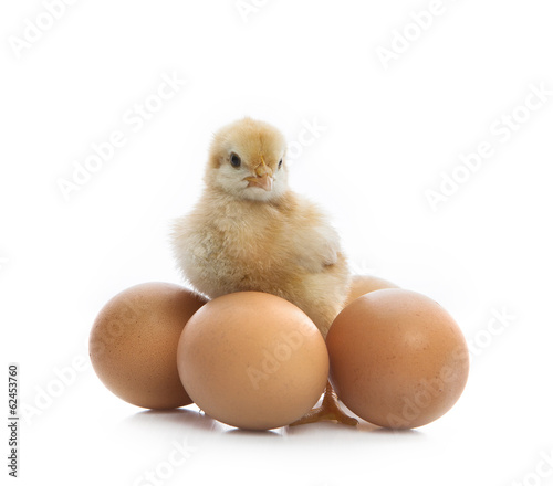 new born yellow chick standing beside eggs